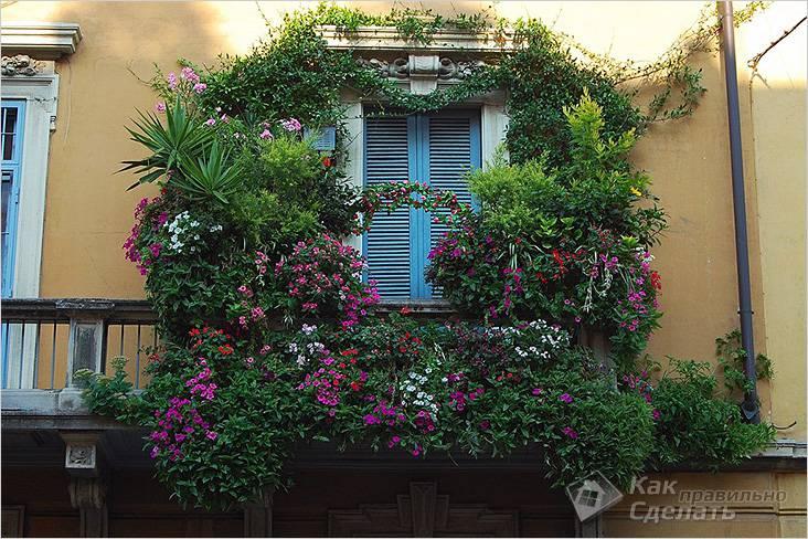 Балкон-сад