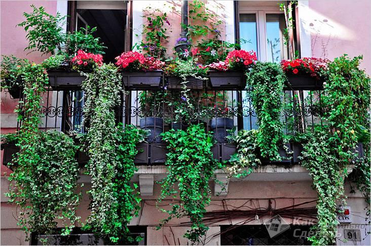 Композиция на балконе с ампельными растениями