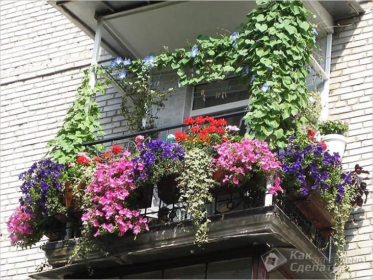 Вьющиеся растения в интерьере балкона