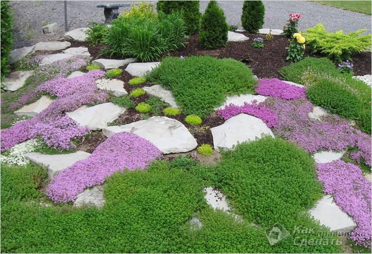 С ковровыми растениями