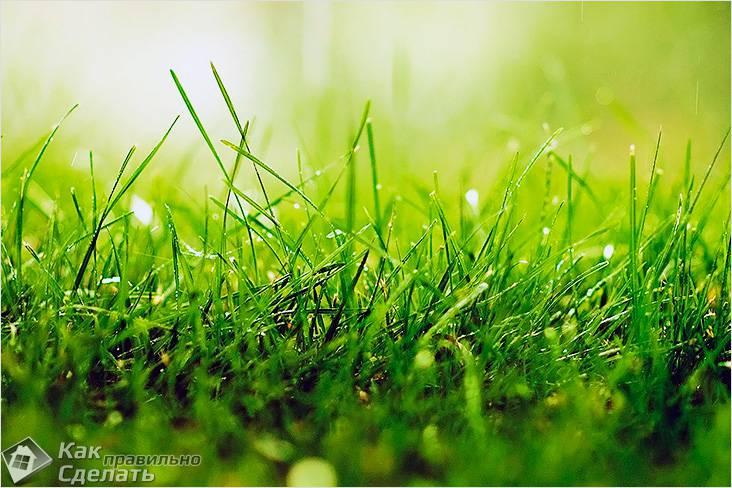 Как выбрать газонную траву для дачи - обзоры рекоменации рейтинг