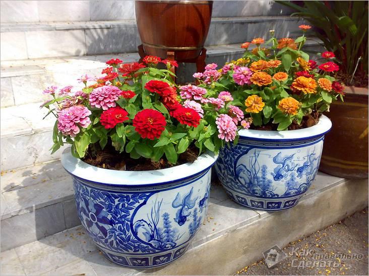 Особенности выращивания цветов в
