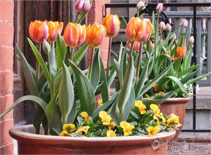 Тюльпаны в качестве фокусных цветов