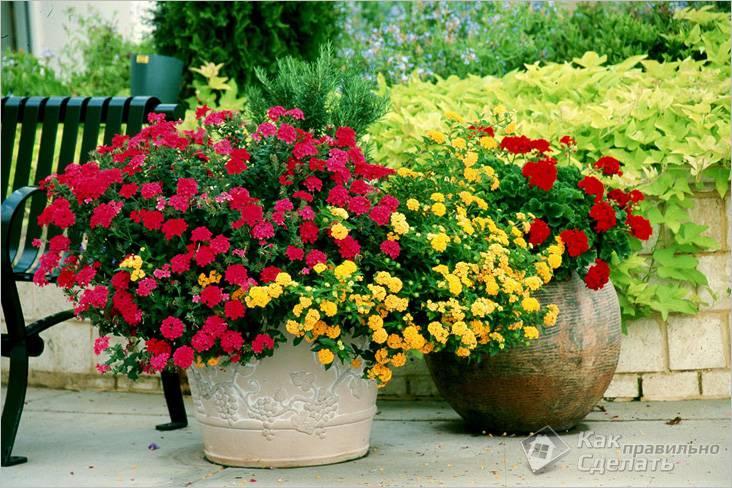 Выращивание в вазонах