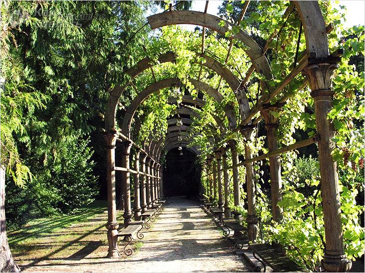Арка над лавочками, для винограда
