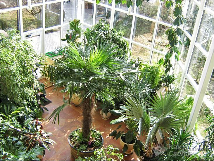 Сад с тропическими растениями