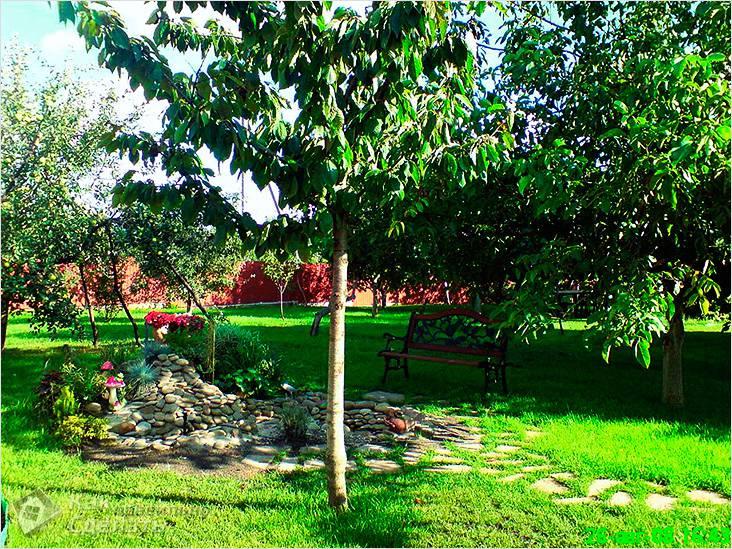 Зона плодовых деревьев и кустов