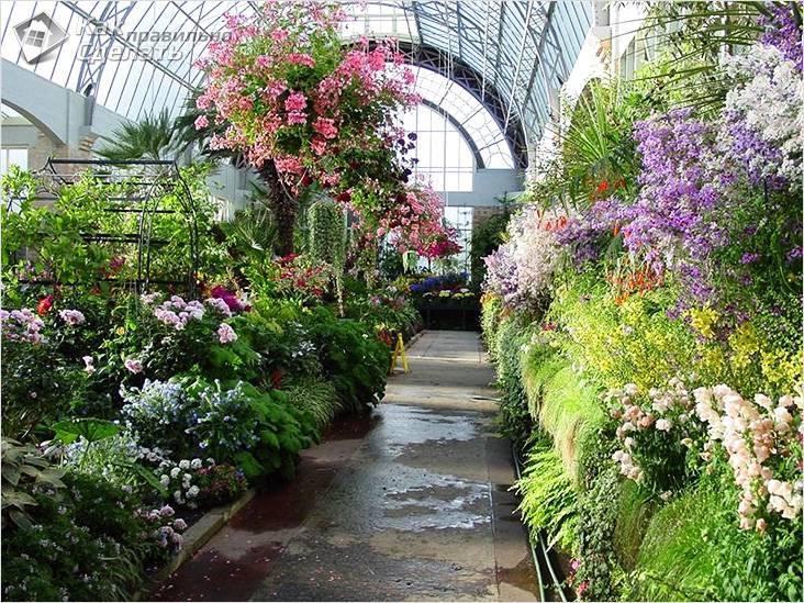 Насыщенный зимний сад