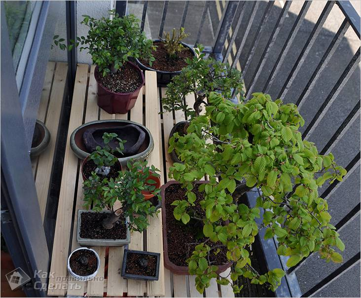 Японский сад бонсай на балконе