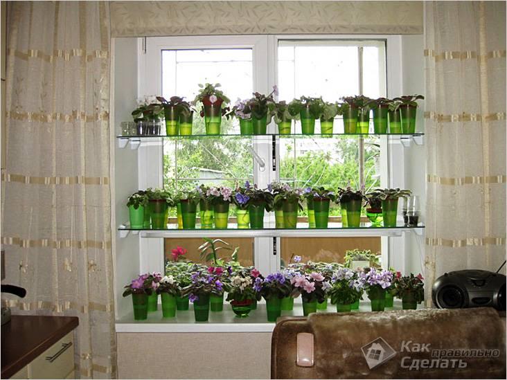 Цветы на стеклянных полках