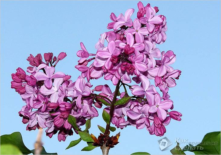 Сиреневые цветы на фоне неба
