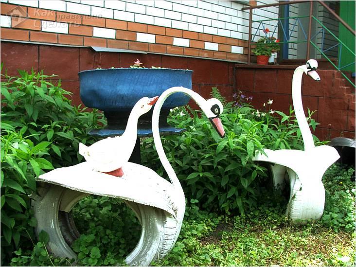 Лебеди в гостях