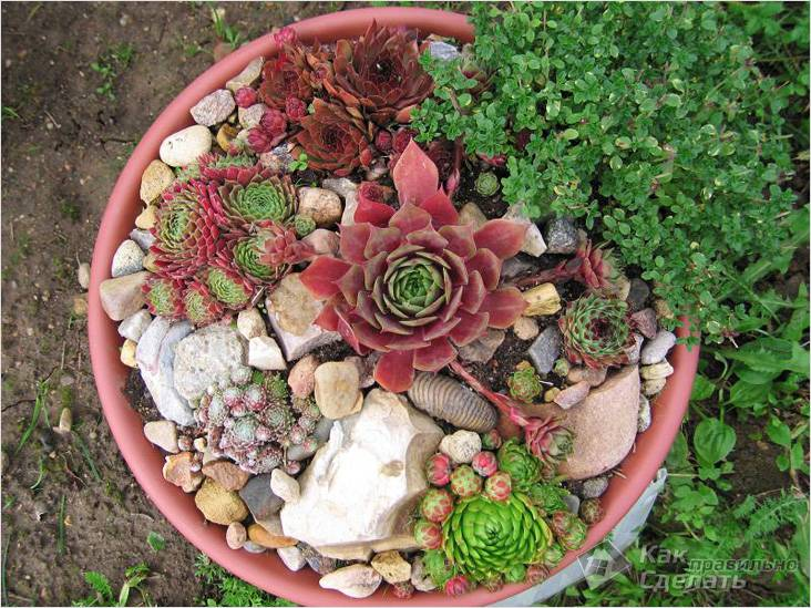 Клумба из цветов и камней