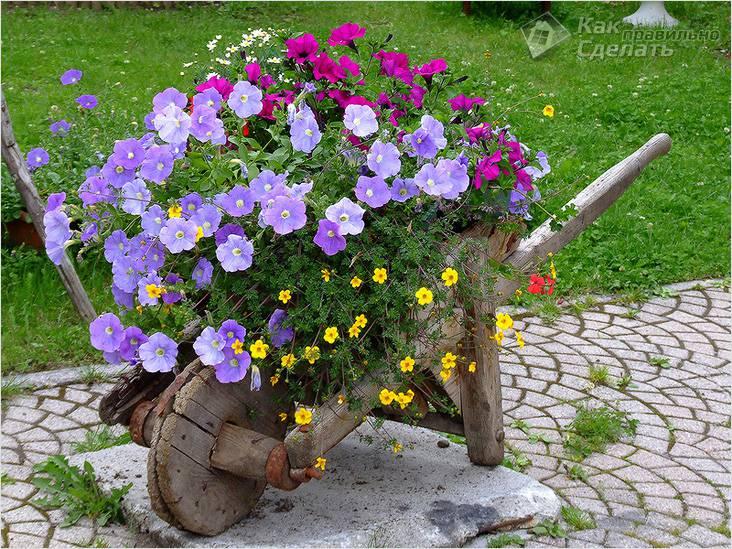 Клумбы для цветов