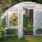 Homemade greenhouse with tomatoes plants inside, Warm sunny day