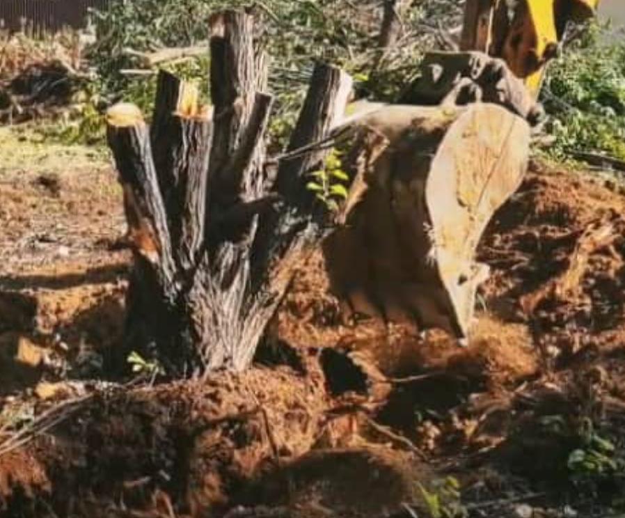 Для чего нужна вырубка деревьев